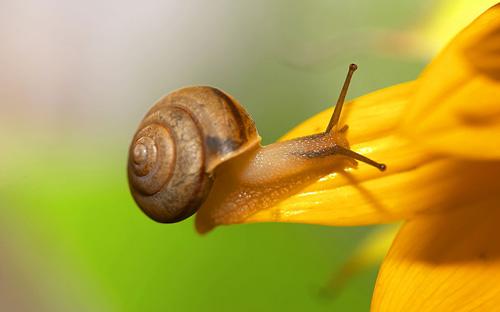 蜗牛的功效与作用 蜗牛的营养价值