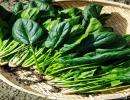 吃菠菜竟有助于预防痔疮