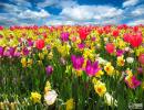 春季花粉过敏怎么预防