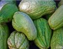 夏季预防白癜风要常吃佛手瓜