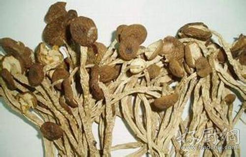 茶树菇的营养价值 茶树菇的做法大全