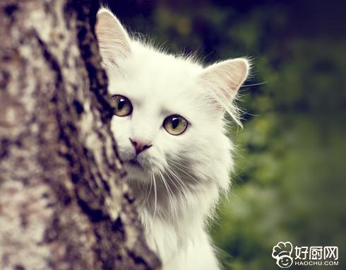 忧郁呆萌的动物图片