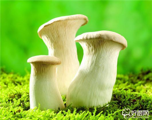 栎树上,有毒蘑菇往往生长在阴暗