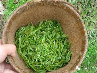 中国十大名茶有哪些