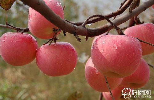 减肥 苹果会增加饱腹感,饭前吃能减少进食量,达到减肥的目的.