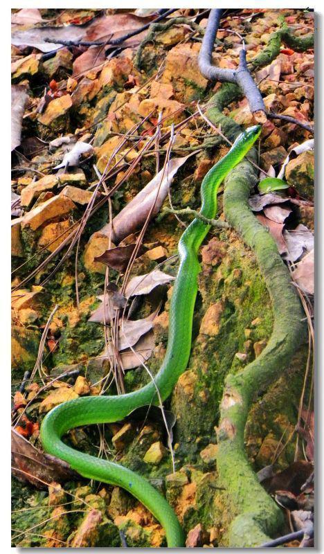 怎么分辨蛇有毒
