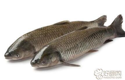 草鱼的营养成分