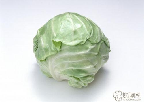 常吃圆白菜的好处有哪些_1