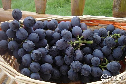 葡萄酒的制作方法_10