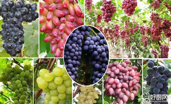 葡萄酒的制作方法_9