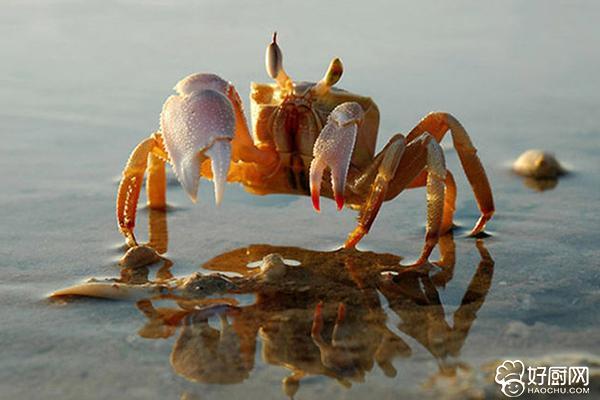 如何挑选螃蟹_1