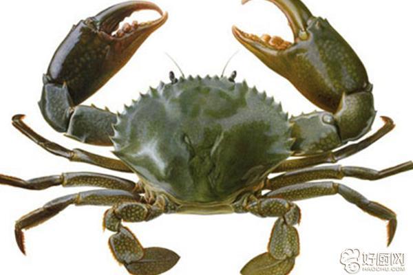 如何挑选螃蟹_6