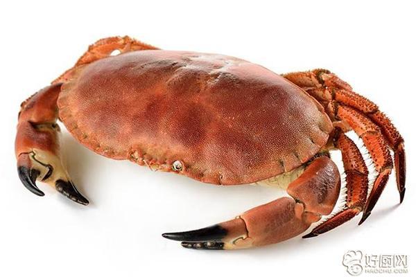 螃蟹禁忌与保存_2