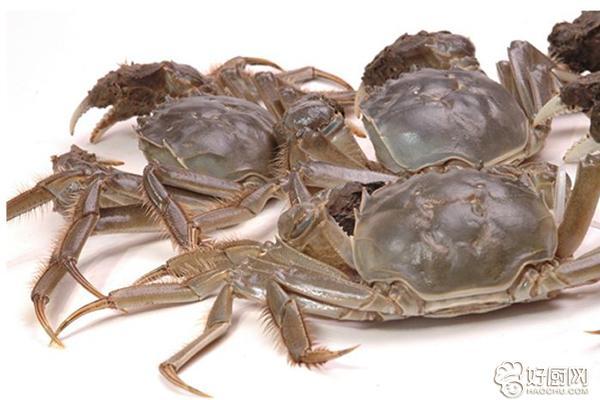 螃蟹禁忌与保存_1