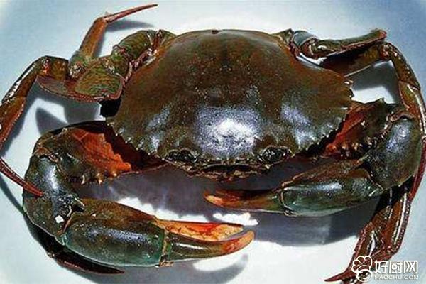 螃蟹禁忌与保存_4