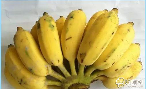 怀孕可以吃芭蕉吗_3