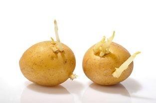 你知道怎样挑选土豆吗?_2