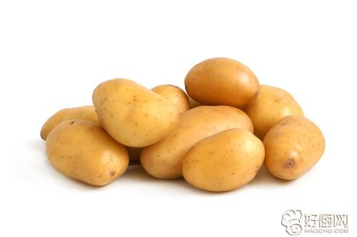 你知道怎样挑选土豆吗?_3