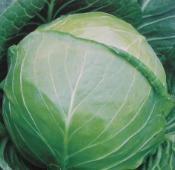 圆白菜的营养成分_1