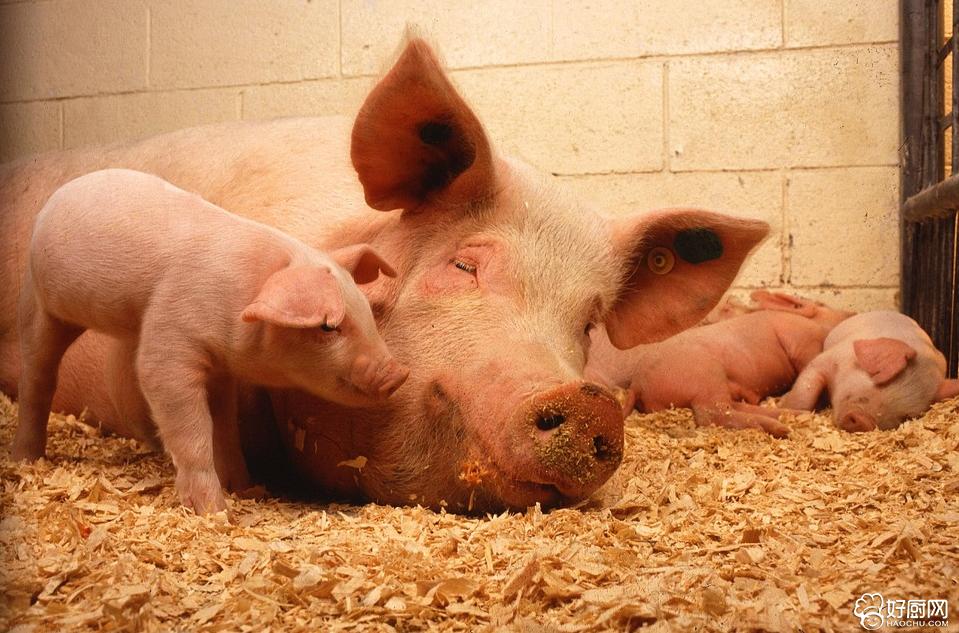 常吃猪肝能缓解眼睛疲劳_1